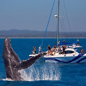 Blue Dolphin a great platform to enjoy seeing Humpback Whales. Low passenger numbers and pleanty of room