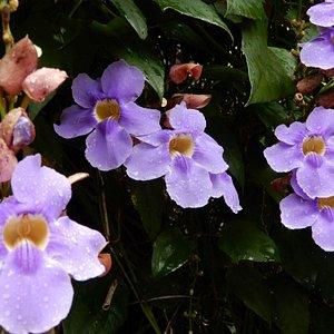 These beautiful flowering plants were in abundance
