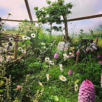 The Burren Botany Bubble home to the National Collection of Burren Flora. Learn about the extraordinary range of wild flowers and orchids that bloom on the Burren, Spring Gentians from the Apls, Mediterranean orchids, Mountain Avens from the Arctic and even Maidenhair fern from the tropics! Take the free 10 stop audio tour and identify plants on your way through magical Burren habitats.