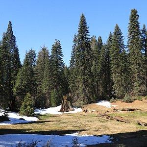 Big Stump Basin - meadow with stumps
