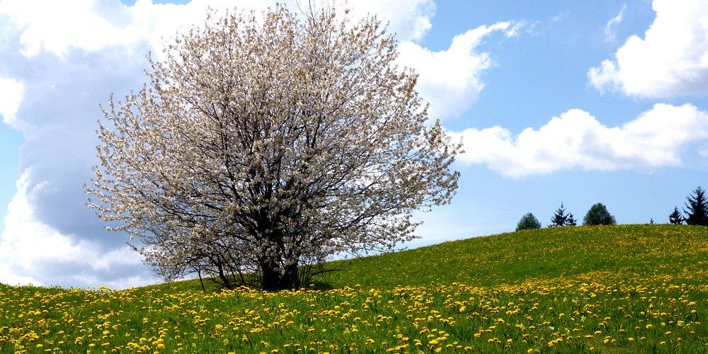 Dopo la nevicata  della settimana passata...esplode la primavera..
