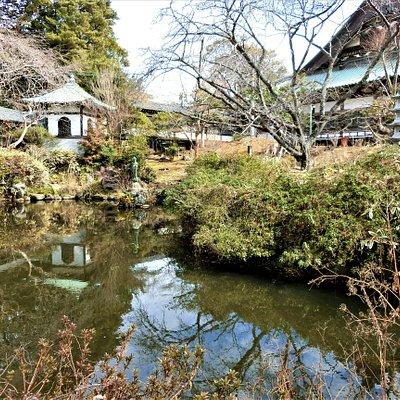 遊行寺 放生池~3