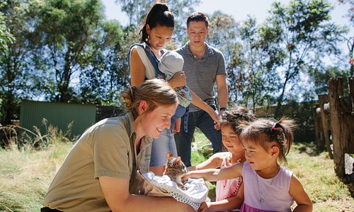 Sydney's hands-on wildlife experience with numerous interactive animal encounters