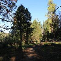 Wawona Meadow (10)