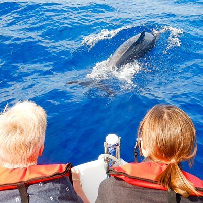 Guests on board observing bottlenose dolphin