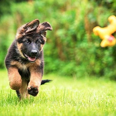 I love puppies ecpiessaly German Shepards!