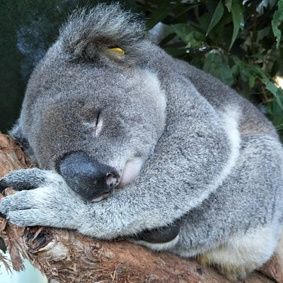 Meet our exhibit patients. This is Guyra Allen taking a nap.