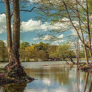 Tilgate Lake