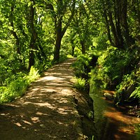 Leat in the Luxulyan Valley