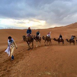 Camel trekking in the desert