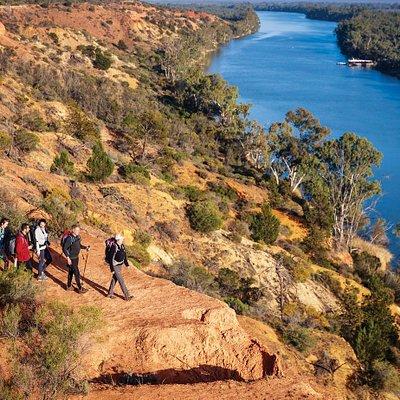 Walking along the might Murray River