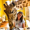 Nomadic_Giraffe