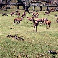 Imperdible paseo admirando los hermosos ciervos rojos ....un lugar para encantar