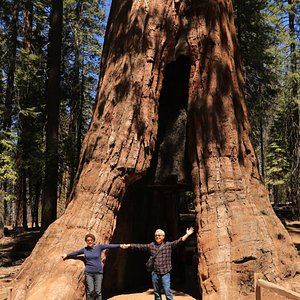 California Tunnel Tree - with happy tourists