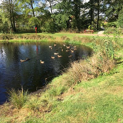 Søen med ænder. Som næsten kan blive tamme.