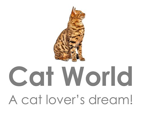Everything for the cat lover and their feline friends