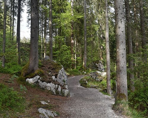 A typical bit of the trail on the north side of the Hintersee, looking east.