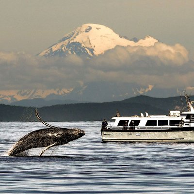 Humpback whale with the MV Red Head