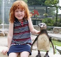 Penguin photocall at Paradise Park in Hayle Cornwall