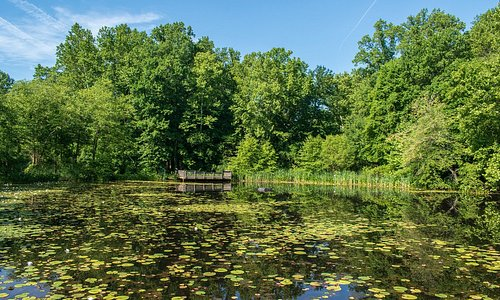 Walney Pond at Ellanor C. Lawrence Park. (AlpinerHut)