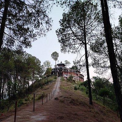 View among trees