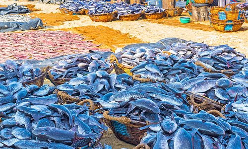 Negombo Fish Market Tour arranged by www.tourmart.net