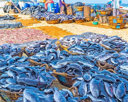 Negombo Fish Market Tour arranged by www.tourmart.net