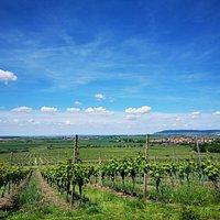 Wein Paradies Scheune