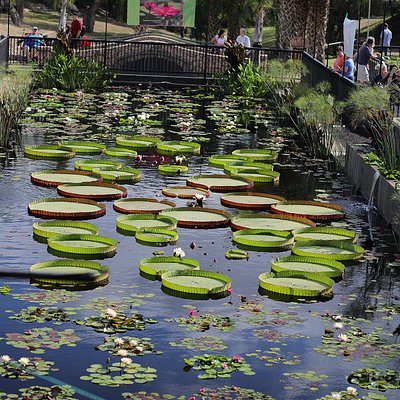 A view of the Main Basin from LilyFest 2017