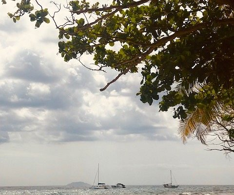 Laying under a tree watching the boats