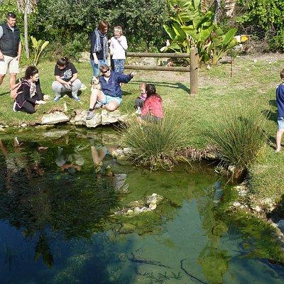 Feeding the Eels in the fountain