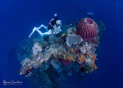 Diving with coral and barrel sponge