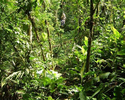 Jungle Breeze Zipline