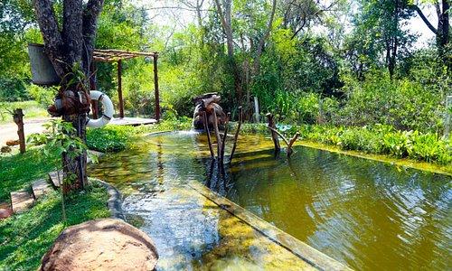 The Organic Pool