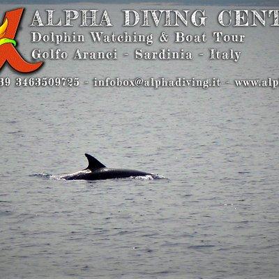 Avvistamento durante una delle nostre escursioni di Dolphinwatching