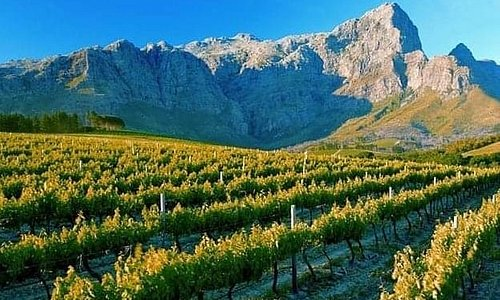 The good thing about  Cape Winelands visit you will exlope the beautiful mountain valleys and enjoy delicious wine tasting.