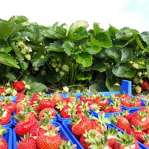 Erdbeerhof Dahmen