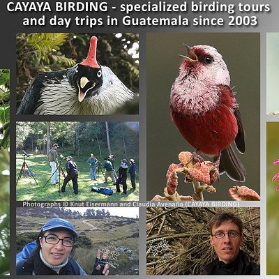 CAYAYA BIRDING specialized birding tours and day trips in Guatemala since 2003