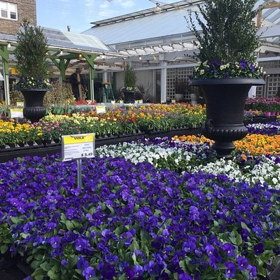 Spring selection of flowering annuals.