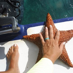 A starfish we found while snorkeling with  Gene, Jessie loves starfish