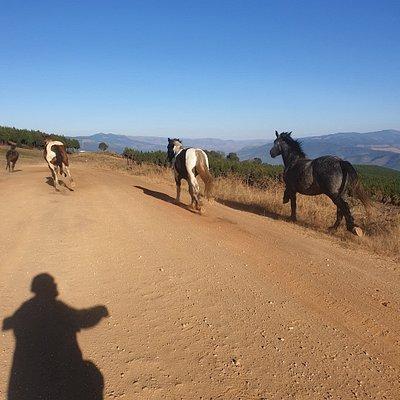 Kaapsehoop Horse Trails Volunteer Project