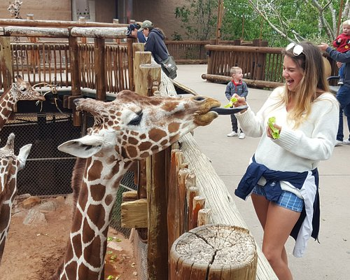 You can feed the giraffes too.