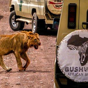 The best of Ngorongoro