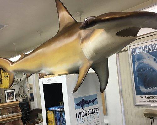 Stewart, our Smooth Hammerhead shark, named after shark conservationist and filmmaker Rob Stewart!