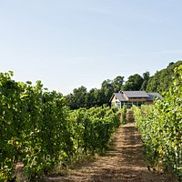 Our contemporary tasting room sits on a hill overlooking the vineyard, orchards and the beautiful Leelanau landscape.
