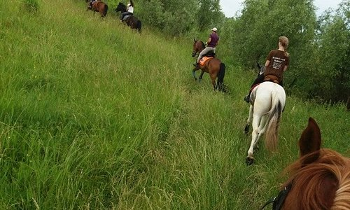 Супер классный активный отдых! Туры на лошадях! Красивые ухоженные лошадки. Самый вкусный шашлык и мангал-меню. Мы ждем Вас в гости.