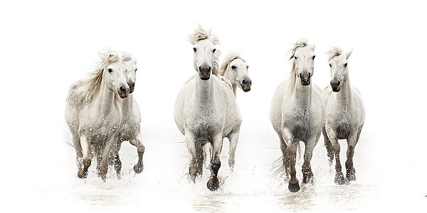 The White Horse Collection  Running Free David Beavis