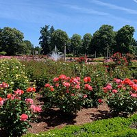 well maintained rows of roses