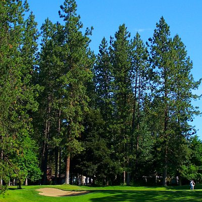 Tall pines line the course.