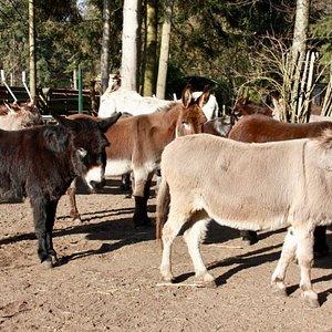 Welkom bij de Ezelsociëteit! Kom gezellig langs en ontmoet alle ezels.